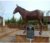 Photo of the Muleshoe mascot, the mule